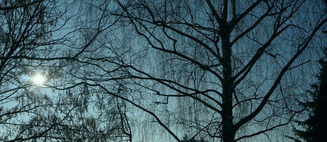Bäume gegen das Licht mit α6000