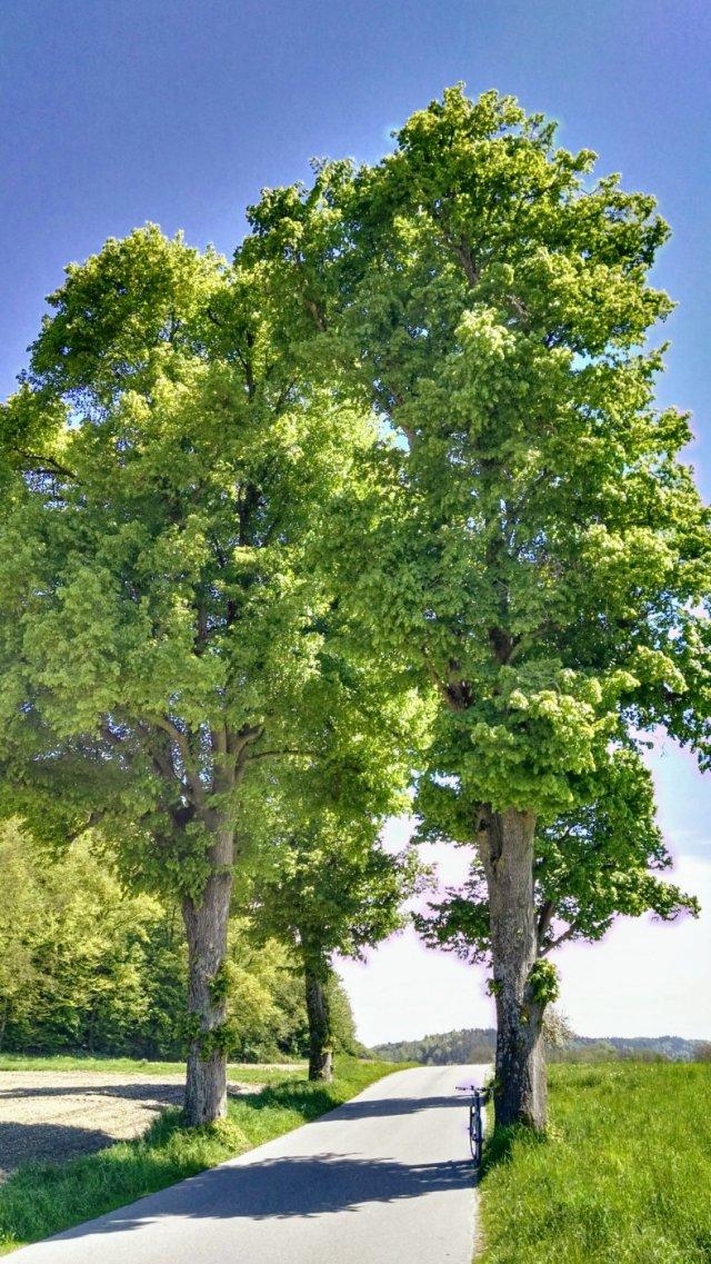 Stammham - Untertürken, Bäume