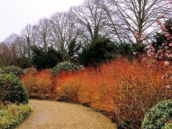 cornejo-arboles-rojos-gardenterejea-38947