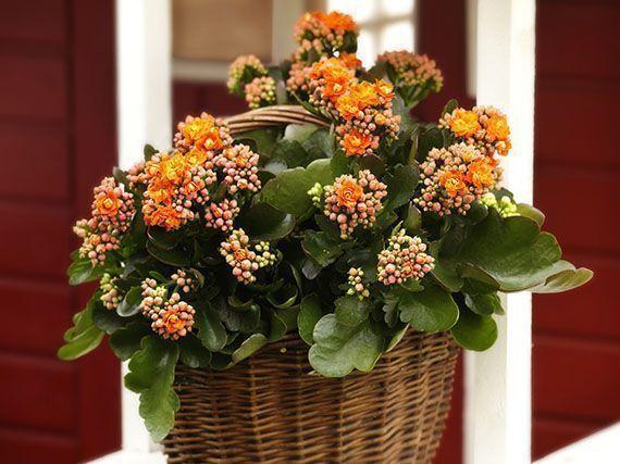 plantas-colores-calidos-para-invierno-garden-center-ejea-345