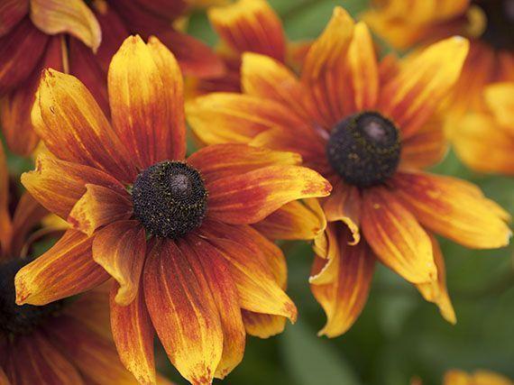 plantas-temporada-verano-735343