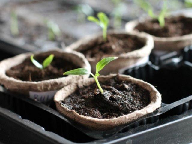 etiquetas-semilleros