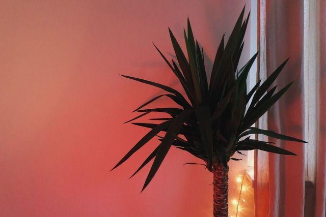 palmera-decoracion