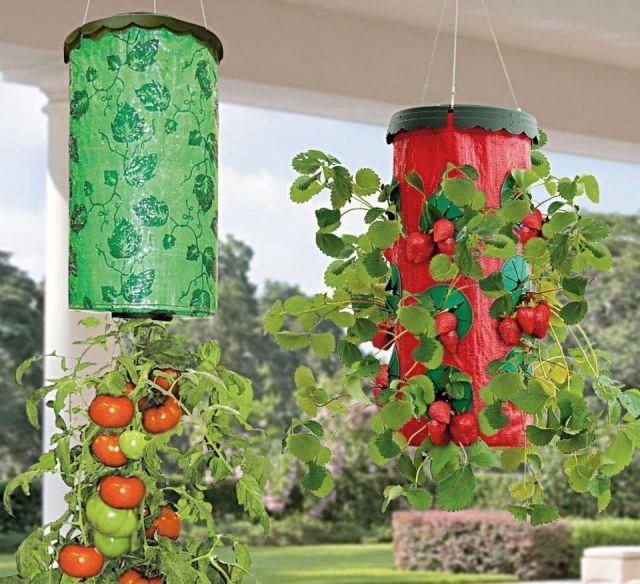 vegetales-cultivarse-maceta-invertida
