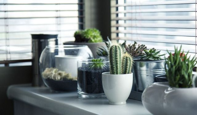 decorar-plantas