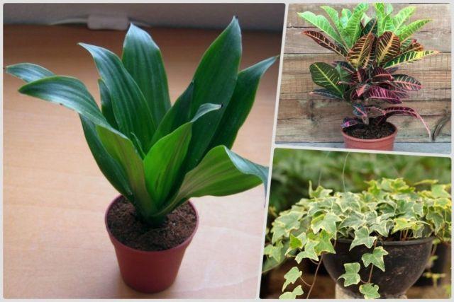 plantas-purificar-aire