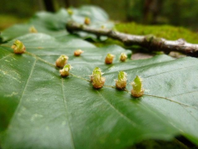insectos-devastadores-plagas-invierno