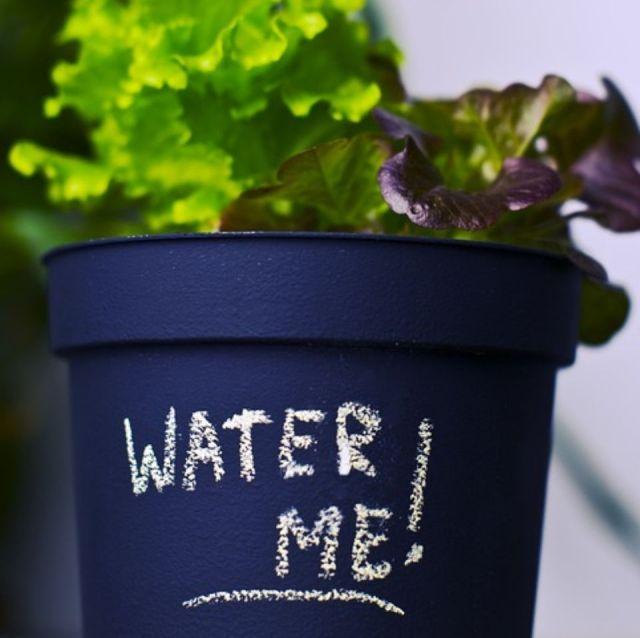errores-regar-plantas