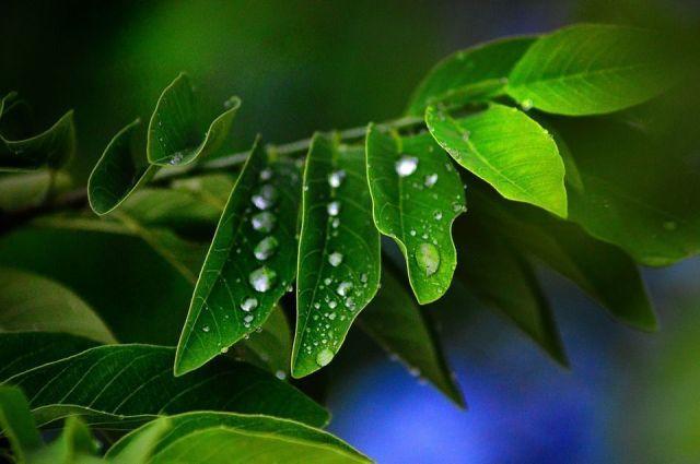 Plantas combatir humedad