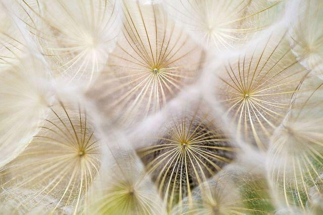 Consejos polen