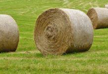 Pasto en rollo