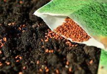 Tipos de semillas