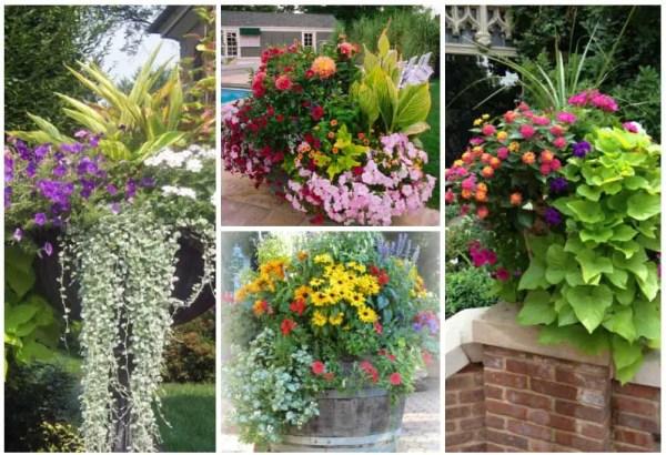 container gardens 8 fantastic
