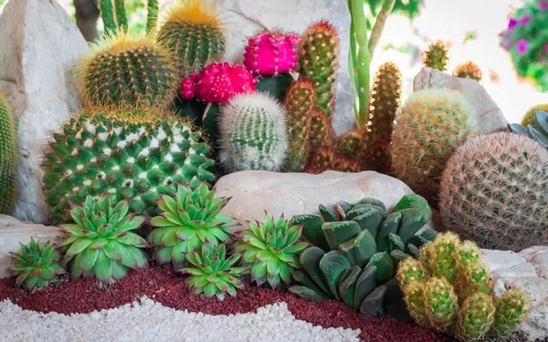 15 Cactus Garden Ideas Photos Garden Lovers Club