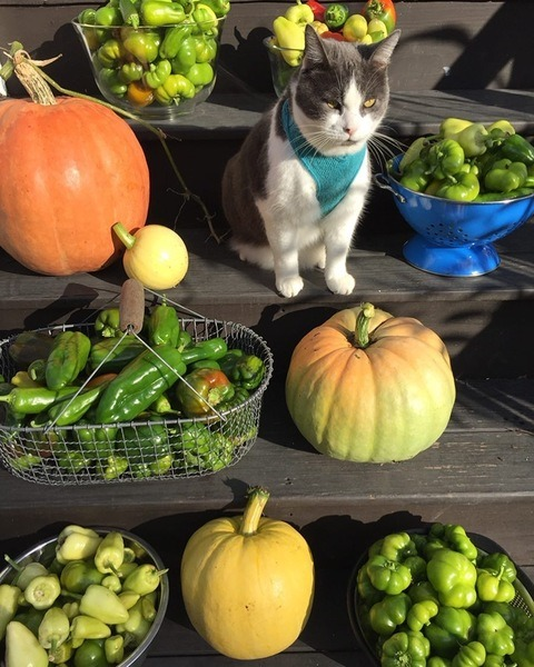 Produce and cat