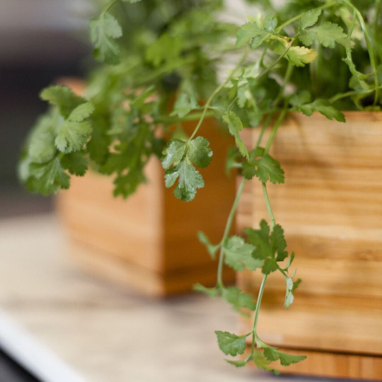Parsley in bamboo box