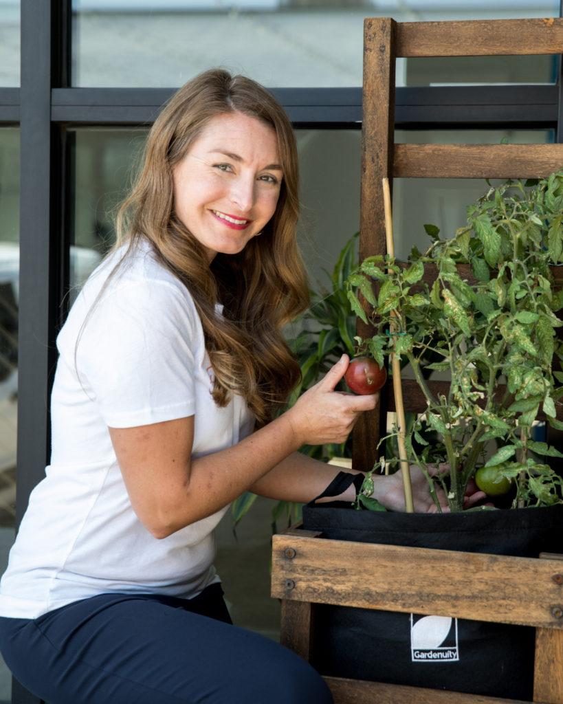 tomato plant has died, plant health