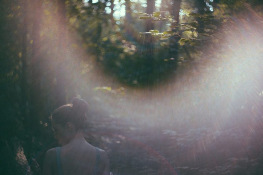 Forrest with lens flare