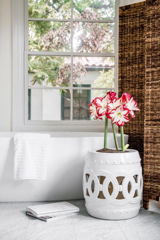 houseplants and indoor furniture