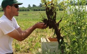 Michael Schmaeling Bee Keeping