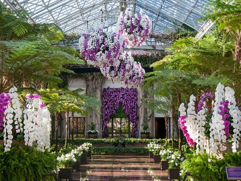 Longwood Gardens Orchid Room