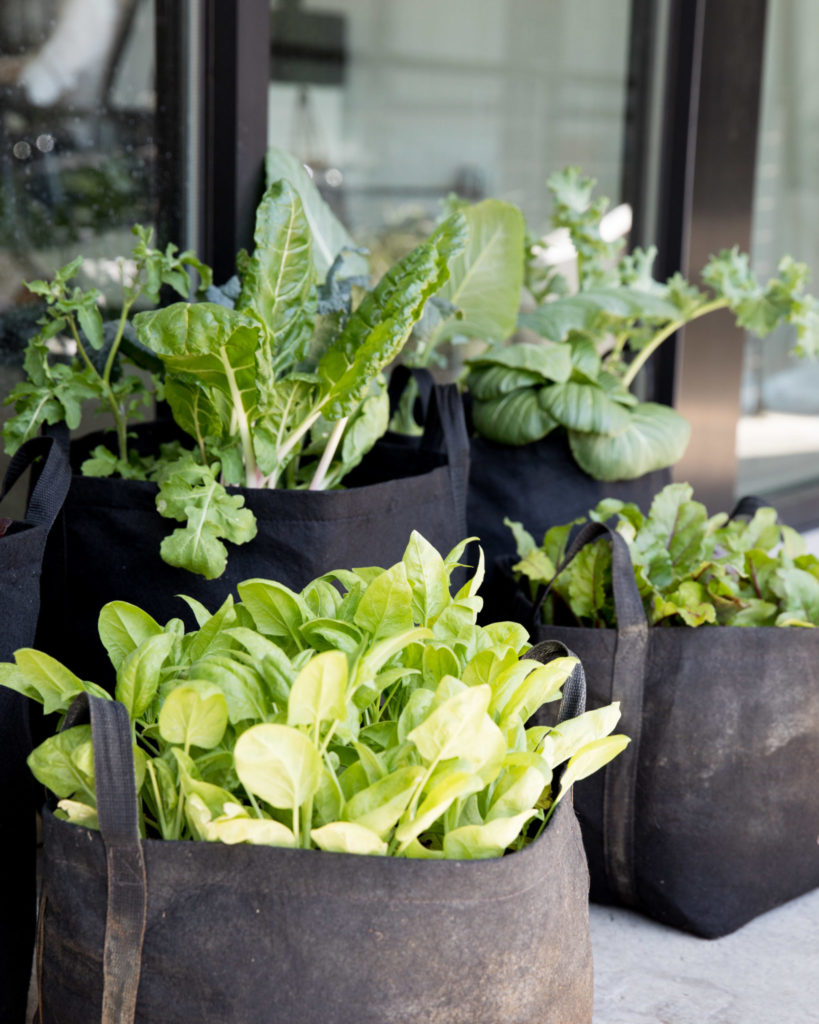leafy green Gardenuity outdoor container garden