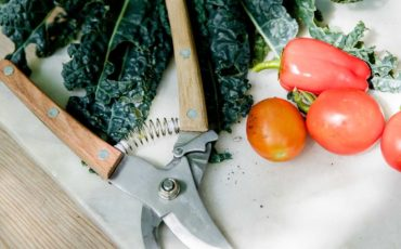 freshly harvested tomatoes and collard greens