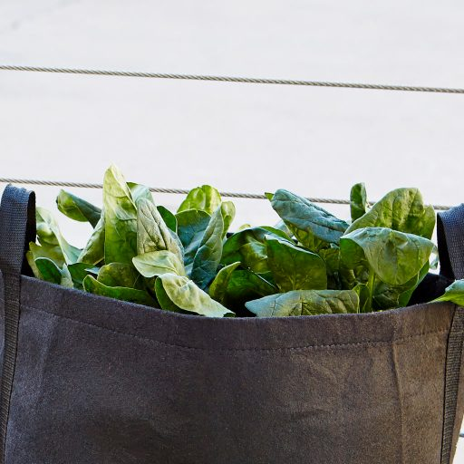 Spinach Container Garden from Gardenuity