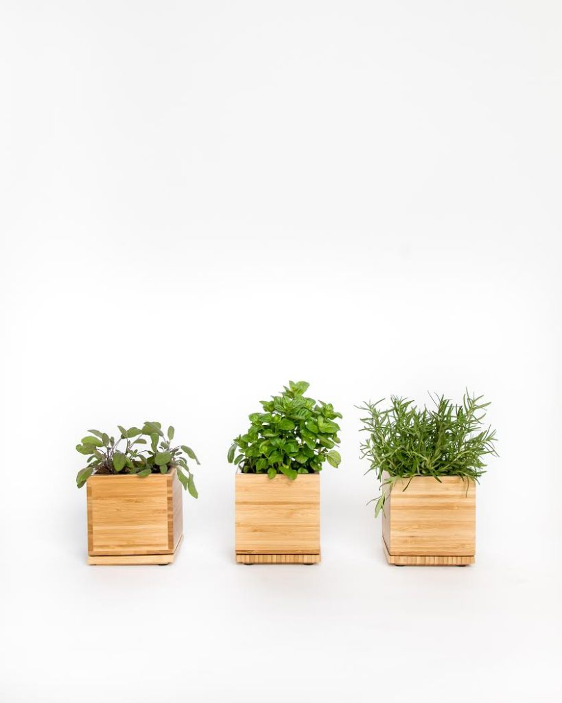 holiday gifts cocktail herb gardens