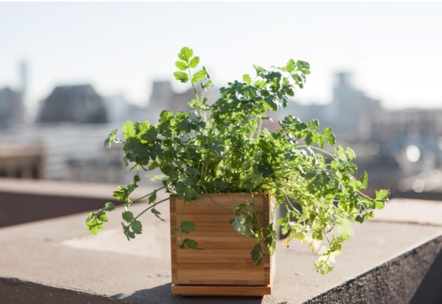 herb box with new growth