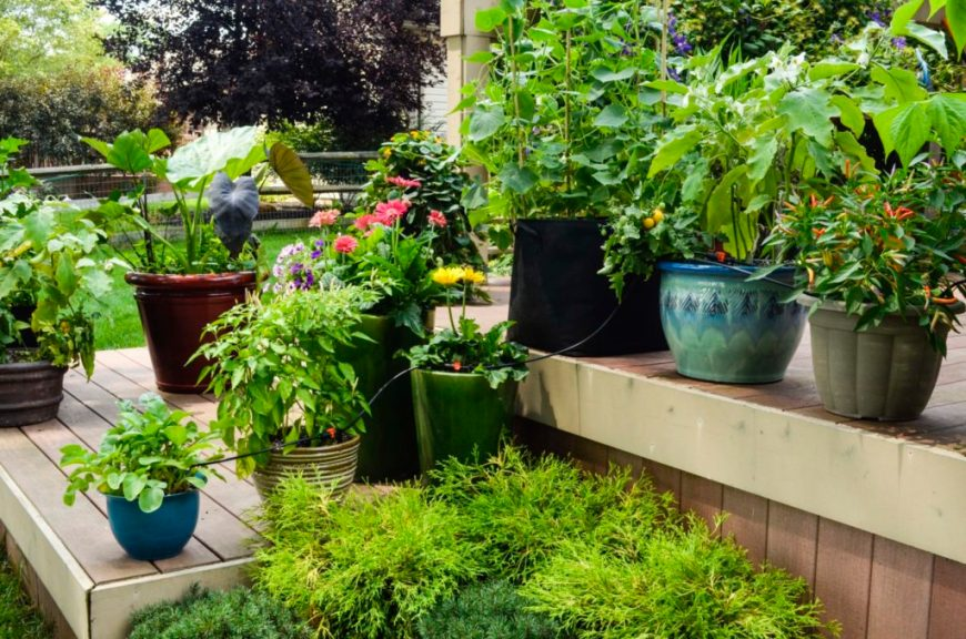 benefits of container gardening