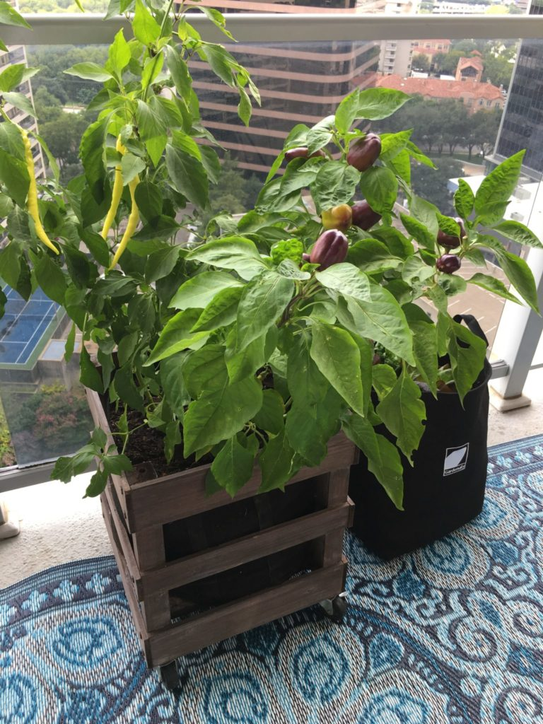 vegetable container garden on balcony
