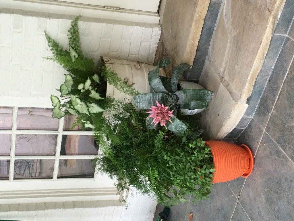 Front Door Plant Decor