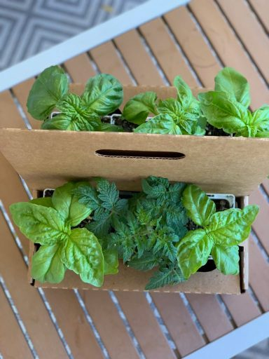 Spring Gardening Herb Collection