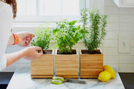Home decor with herbs