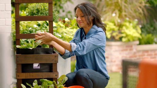 Wellness and gardening