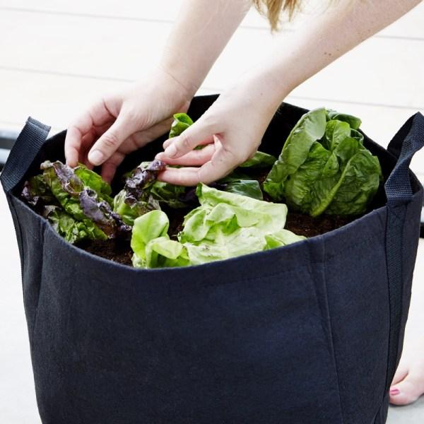 lettuce container garden