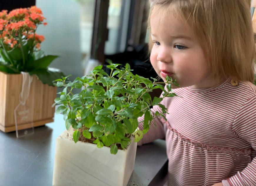 child and herb garden