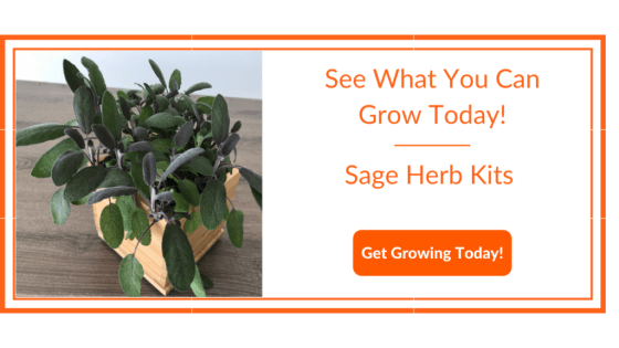 Grow Sage Today