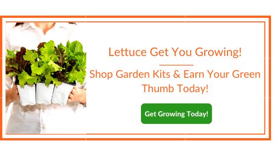 lettuce help you grow