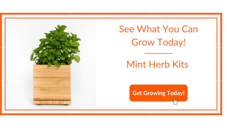Mint Herb Kit