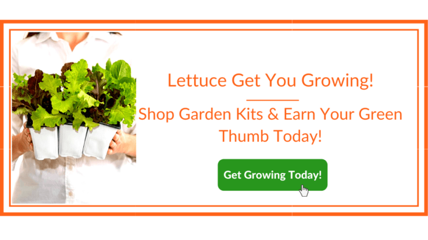 Growing Lettuce Banner