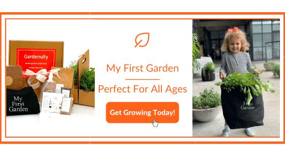 Summer Activities for Kids - My First Garden