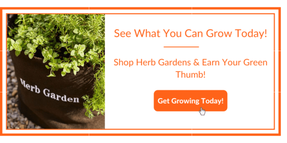 Herb Garden What You Can Grow