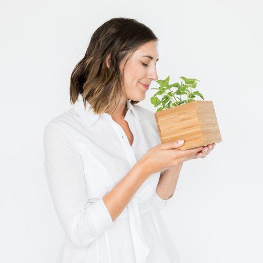 Aromatic Mint - healthiest plants