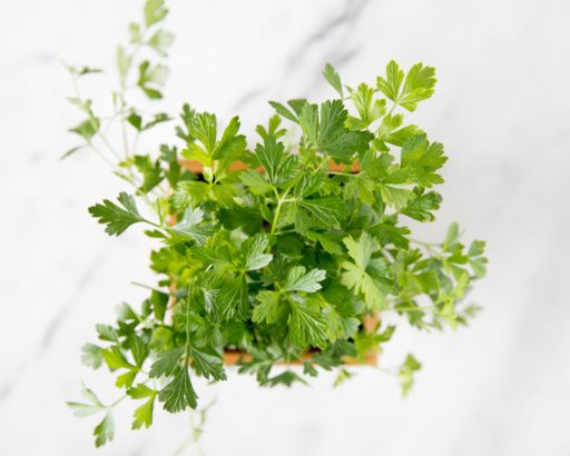 Parsley Herb Box