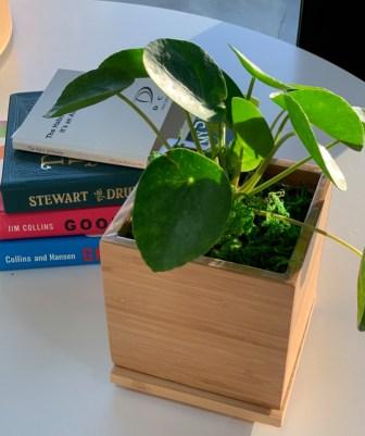 Gardenuity Desktop Garden Box