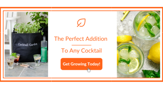 Fresh Gin and Tonic Sparkling Cocktail Recipe - Garden Kit