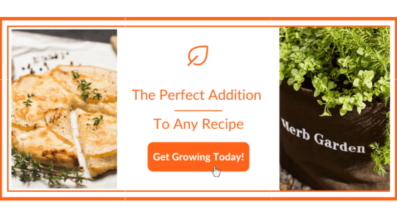 Mouthwatering Herb Recipes - Garden Kit Banner
