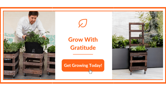 Grow with Gratitude Banner